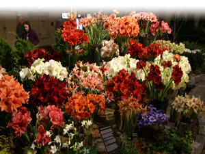 b539c26b A Guide To The Philadelphia Flower Show – CBS Philly