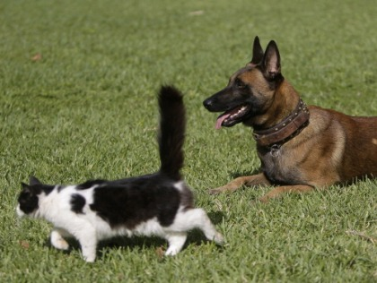 Dogs And Cats Can Detect Illness – CBS Philly