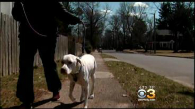 Dog Walkers Take A Bite Out Of Crime In Lower Merion – CBS