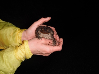 Photo Credit: The Schuylkill Center for Environmental Education