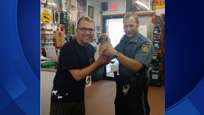 Stolen Puppy From Boyertown Pet Store Found Woman Turns Herself In To Police Cbs Philly