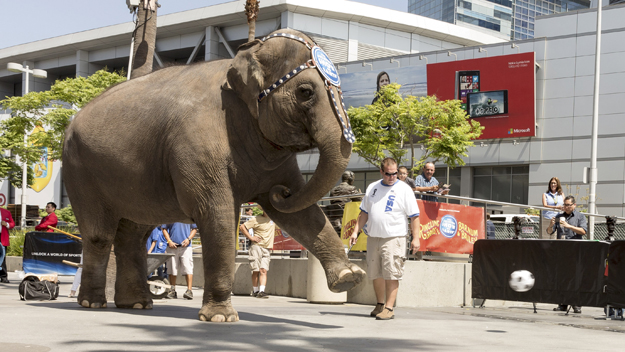 Ringling Bros. Elephant (Photo by Rich Polk/Getty Images)