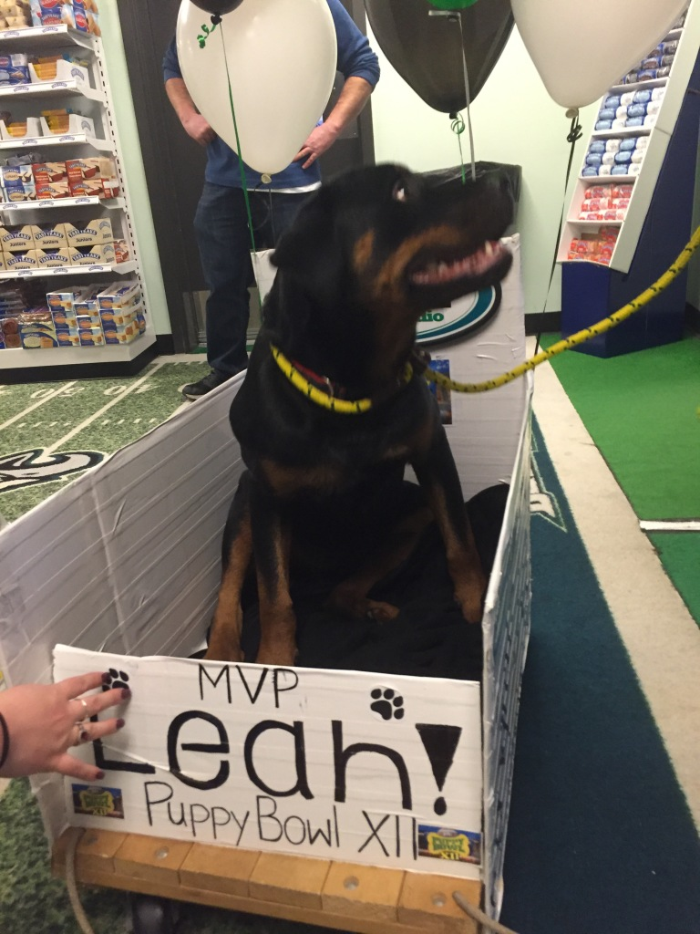94WIP Throws Parade For Puppy Bowl XII Star, Leah – CBS Philly