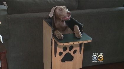 Dog Eats In High Chair To Help With Rare Condition