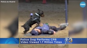 Video Of Police Dog Performing CPR On Handler Goes Viral