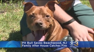 Pit Bull Saves Ocean County Family From Fire