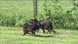 Chester County Animal Rescue, PSPCA Team Up To Offer Animals Therapeutic Program In Countryside