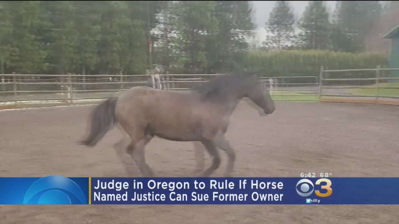 Judge To Rule If Horse Named Justice Can Sue Former Owner In