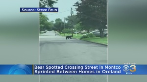 VIDEO: Black Bear Spotted Crossing Street In Montgomery County