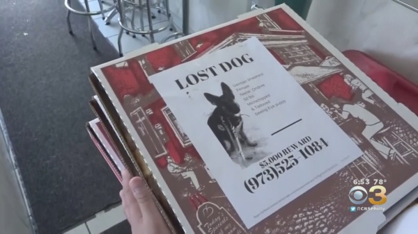 Jones and Company - Pizza Boxes for Lost Pets, Yes Please!
