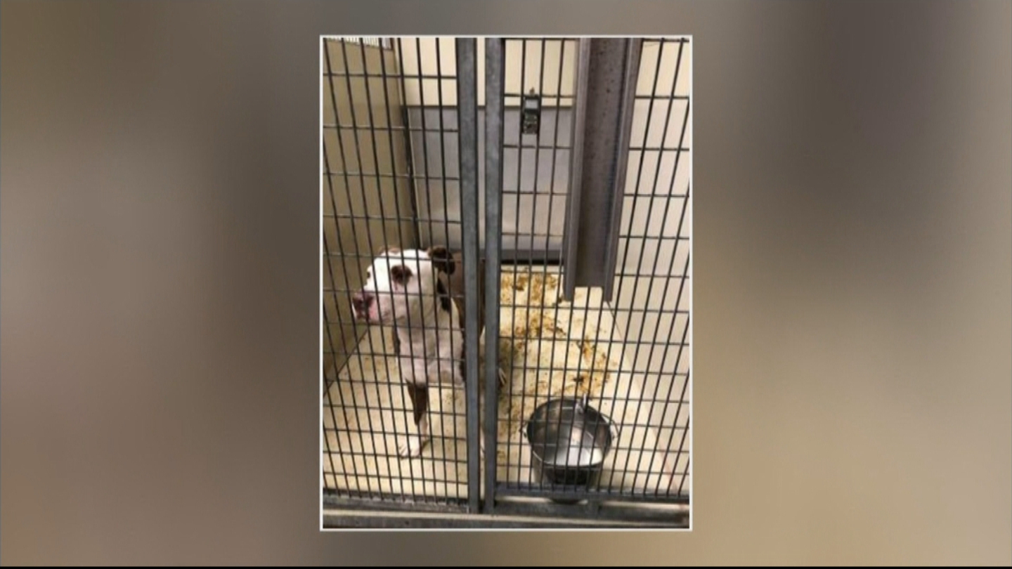 'It Has To Be Corrected': ACCT Philly Supporters Demand More Funding For Animal Shelter Outside Of City Hall