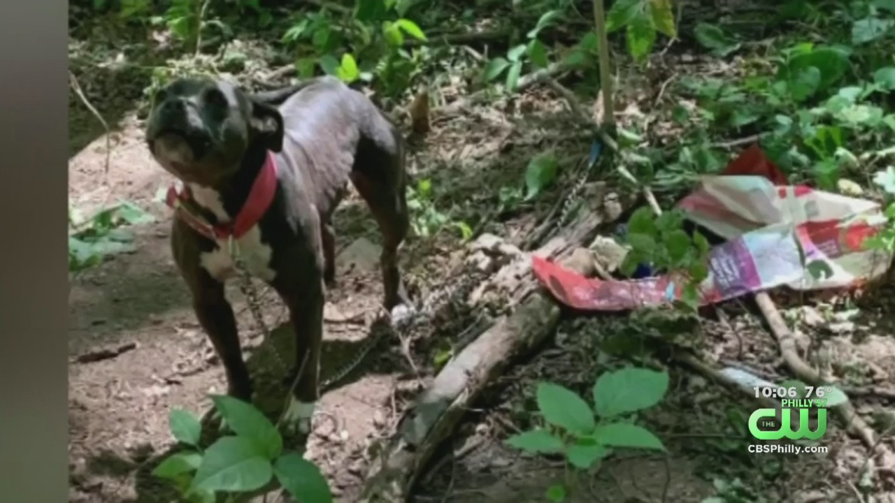 Dog Found Tethered To Tree In Coatesville, Police Say – CBS