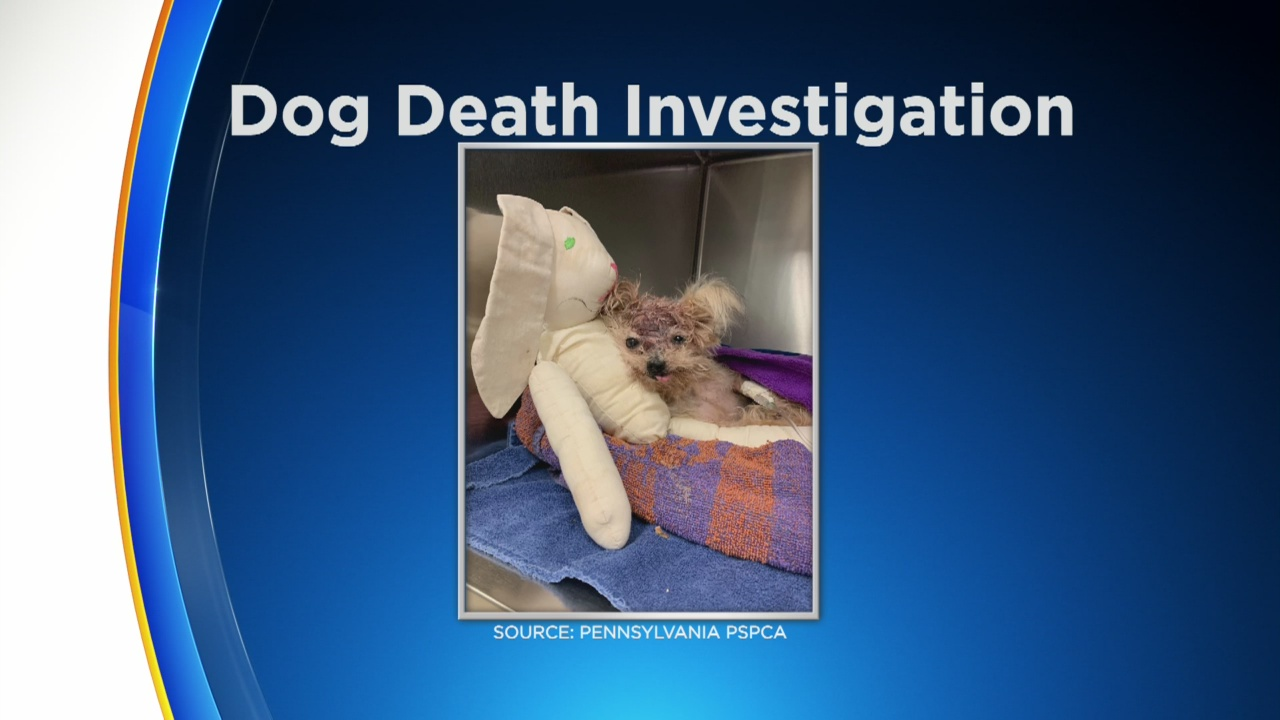 Pennsylvania SPCA Stepping Up Search For Person Who Left Dog To Die In North Philadelphia Trash Can