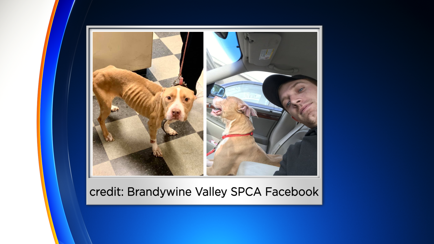 Dog Found Emaciated In Delaware County Adopted By Collingdale Police Officer Who Rescued Her