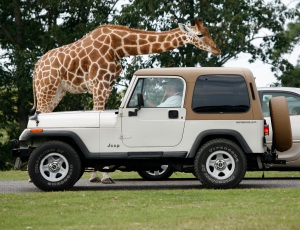 Six Flags Great Adventure Safari Drive-Thru To Reopen May 30, Advance Reservations Required