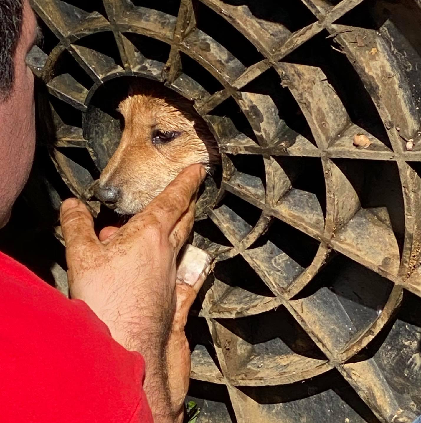 Dog stuck in drain lid rescued by firefighters