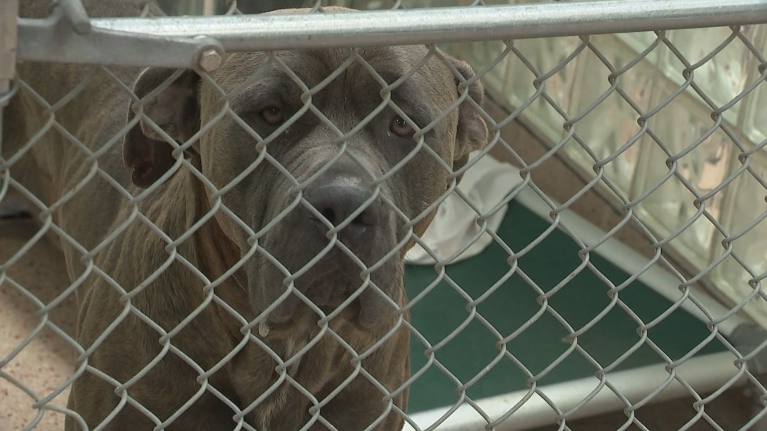 Report finds animal shelters euthanizing pets