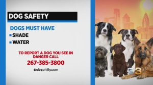 Shade, Water Crucial For Pets During Heat Emergency; Report A Pet In Danger